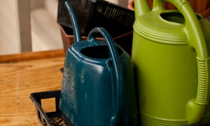 Watering can in an easy-to-find location